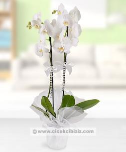 https://www.cicekcibiziz.com//img/product/m/2-dalli-beyaz-orkide-cicegi-C7.jpg