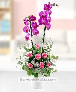 https://www.cicekcibiziz.com//img/product/m/2-dalli-mor-orkide-cicegi-ve-pembe-7-gul-arajmani-3R.jpg