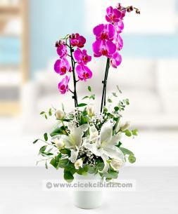 https://www.cicekcibiziz.com//img/product/m/2-dalli-orkide-cicegi-aranjmani-SK.jpg