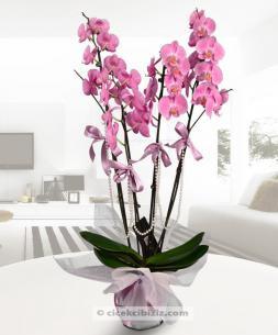 https://www.cicekcibiziz.com//img/product/m/4-dal-pembe-orkide-AJ.jpg