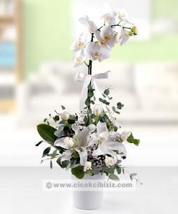 https://www.cicekcibiziz.com//img/product/m/beyaz-orkide-cicegi-gul-lilyum-aranjmani-EC.jpg
