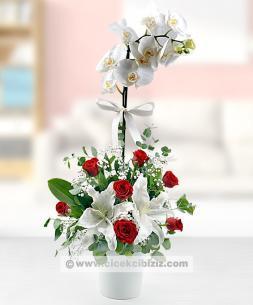 https://www.cicekcibiziz.com//img/product/m/beyaz-orkide-kirmizi-guller-NC.jpg