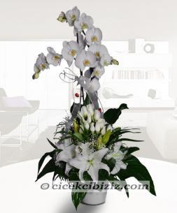 https://www.cicekcibiziz.com//img/product/m/beyazlarin-orkide-cicegiyle-bulusmasi-OD.jpg