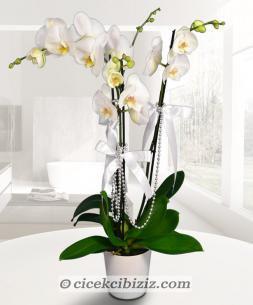 https://www.cicekcibiziz.com//img/product/m/ciceklerin-kralicesi-3-dal-orkide-O7.jpg