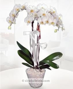 https://www.cicekcibiziz.com//img/product/m/ciceklerin-kralicesi-orkide-FF.jpg