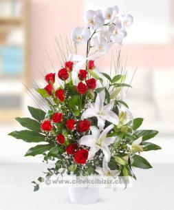 https://www.cicekcibiziz.com//img/product/m/gercek-tutku-orkide-cicegi-AD.jpg