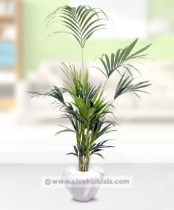 https://www.cicekcibiziz.com//img/product/m/kentya-salon-bitkisi-17.jpg