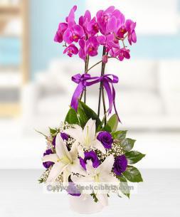 https://www.cicekcibiziz.com//img/product/m/mor-orkide-cicegi-ve-lisyantus-aranjmani-YM.jpg