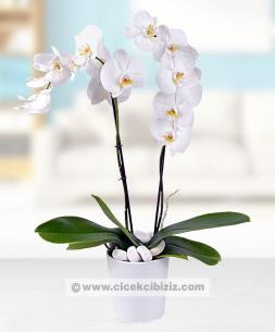 https://www.cicekcibiziz.com//img/product/m/orkide-cicegi-2-dalli-RK.jpg