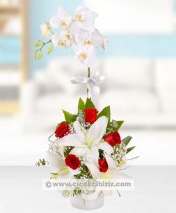 https://www.cicekcibiziz.com//img/product/m/orkide-kirmizi-gul-aranjmani-6A.jpg