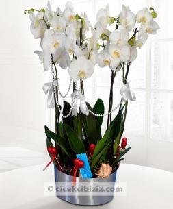 https://www.cicekcibiziz.com//img/product/m/phaleonepsis-5-dal-orkide-cicegi-4L.jpg