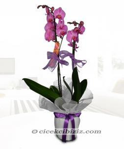 https://www.cicekcibiziz.com//img/product/m/phaleonepsis-C3.jpg