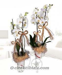 https://www.cicekcibiziz.com//img/product/m/sik-bisiklette-zerafet-O7.jpg