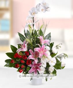 https://www.cicekcibiziz.com//img/product/m/tek-dalli-orkide-arajmani-7Z.jpg