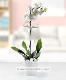 https://www.cicekcibiziz.com//img/product/m/tek-dalli-orkide-cicegi-C2.jpg