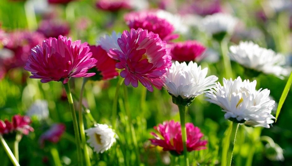 Çiçek Siparişi