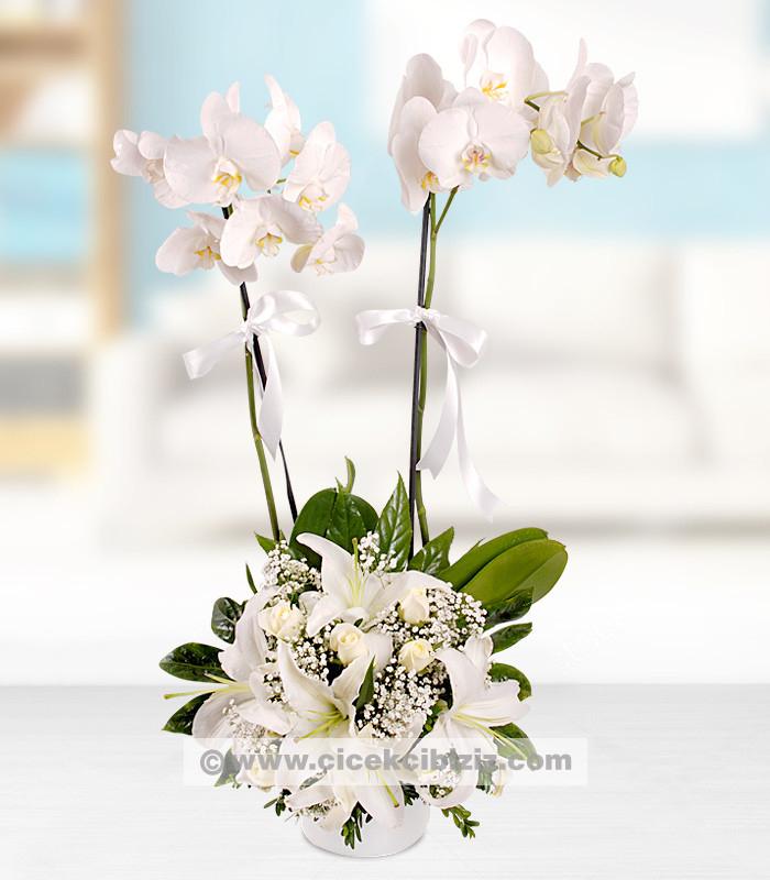 2 Dallı Orkide Çiçeği ve Beyaz  Aranjman