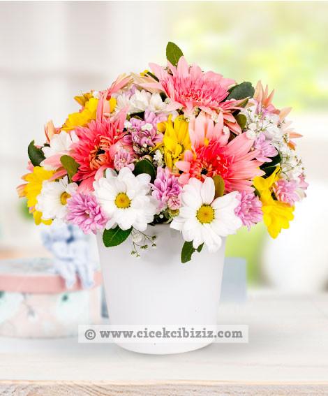 Aşk Esintisi Gerbera Çiçeği