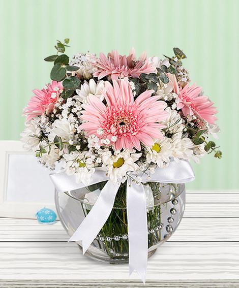 Pembe Düş Kır Çiçeği