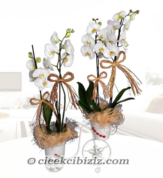 Bisiklette Orkide Çiçeği